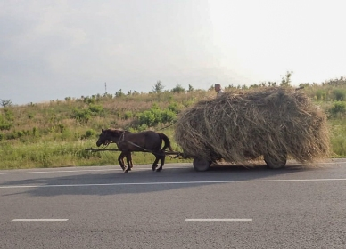 Haycart in Ukraine
