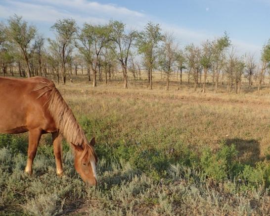 Roadside horse