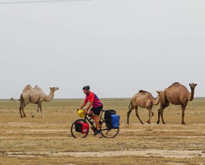 Keith passes camels: Dromedaries, Bactrian and hybrids