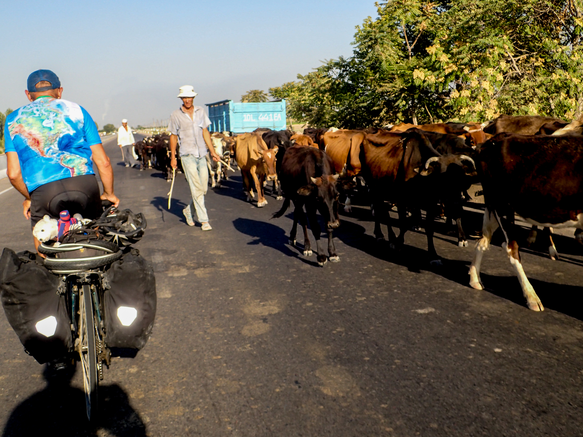 Cows and Cow-Herders