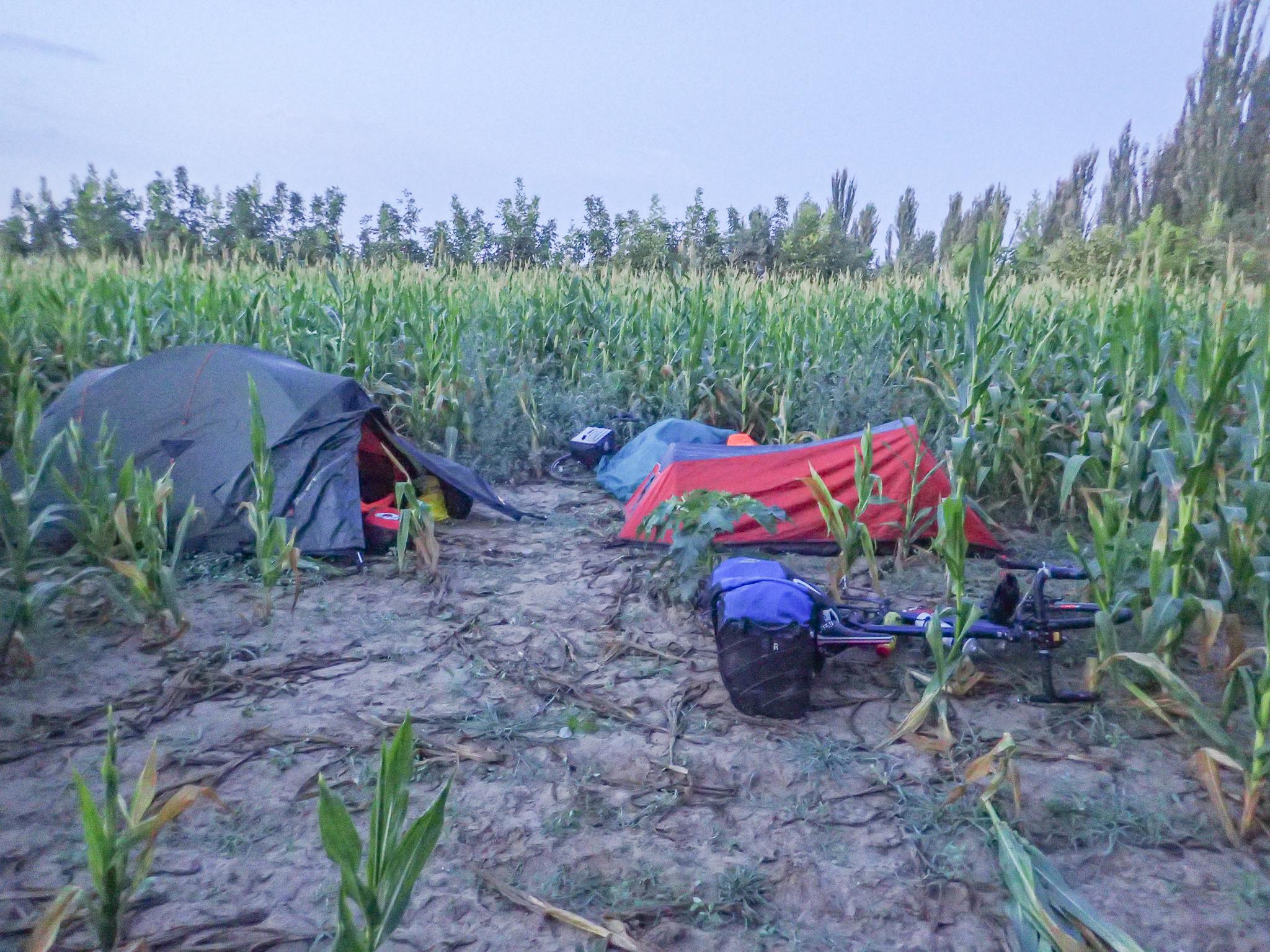Maize camp-site