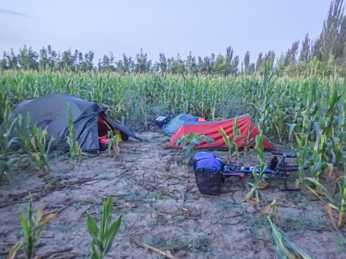 Maize camp-site