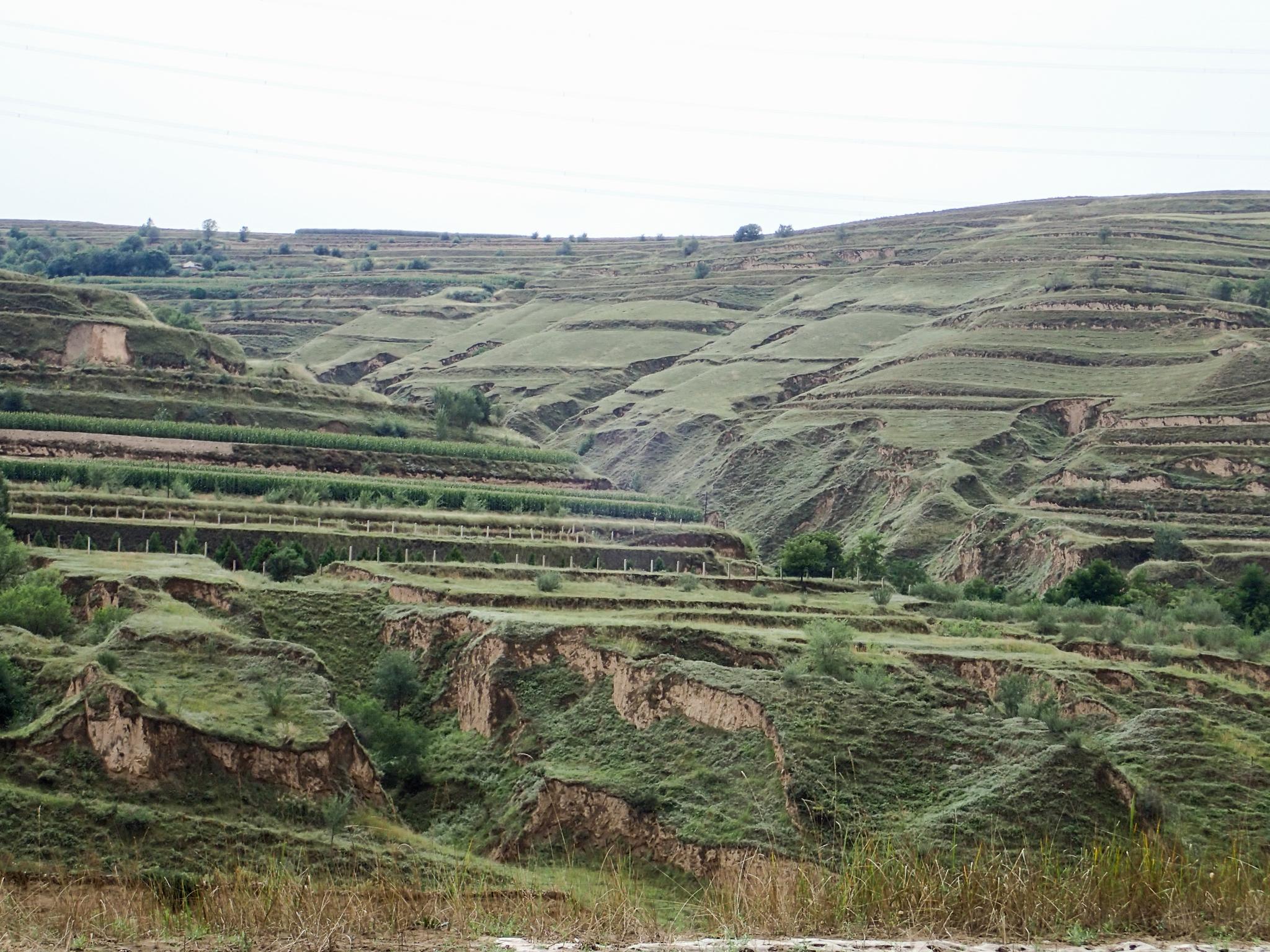 Terraced landscape