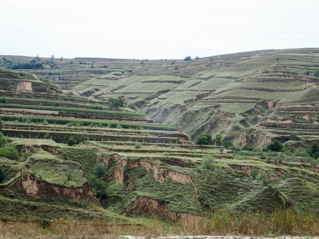 Terraced landscape