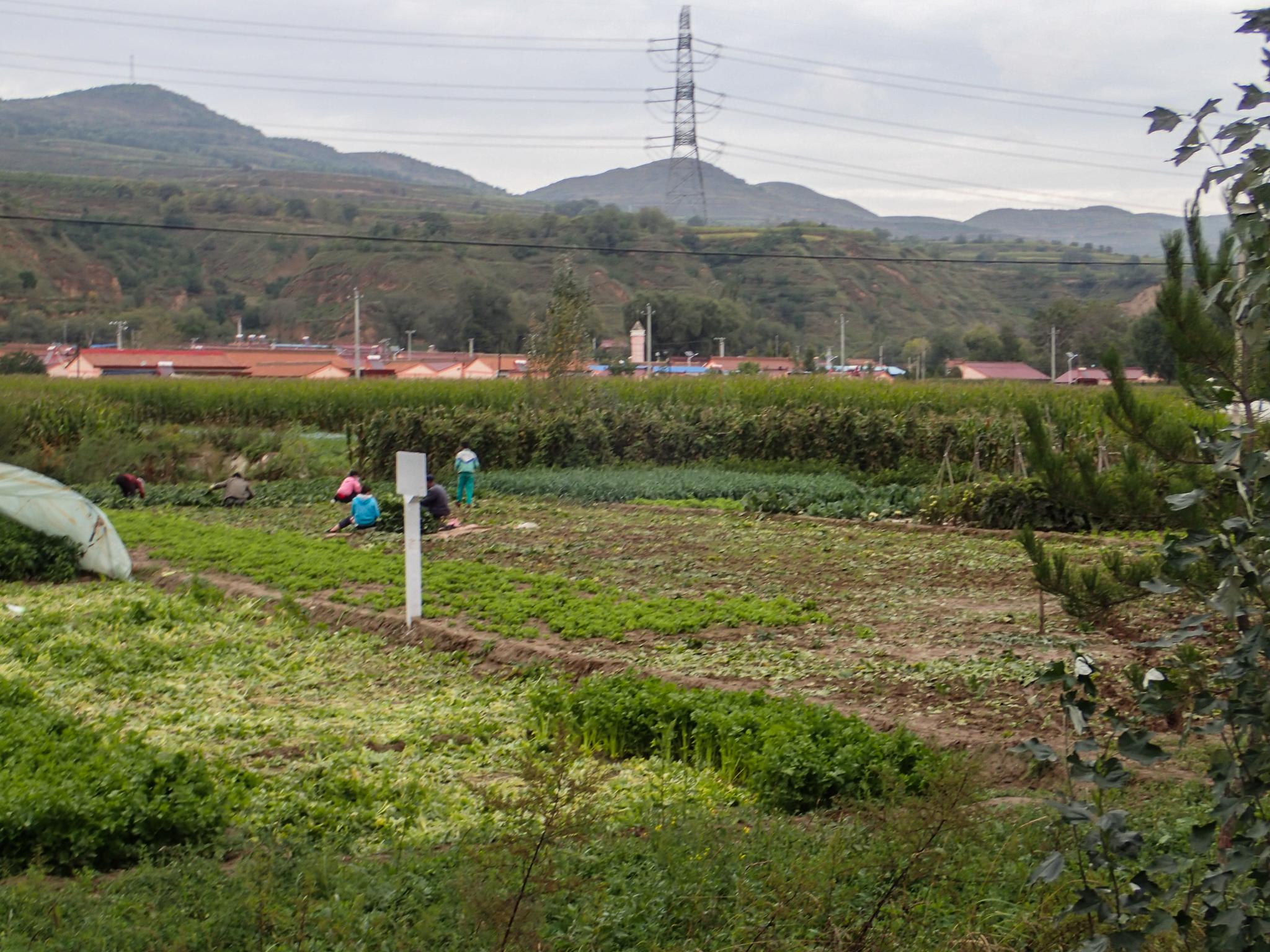 Market gardens