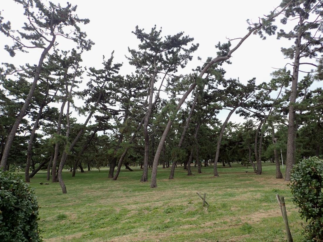 Bendy Trees