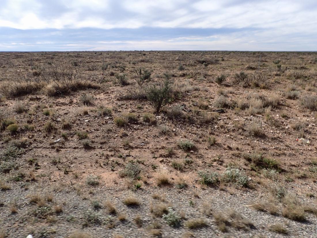 West Texas - prairie scrubland