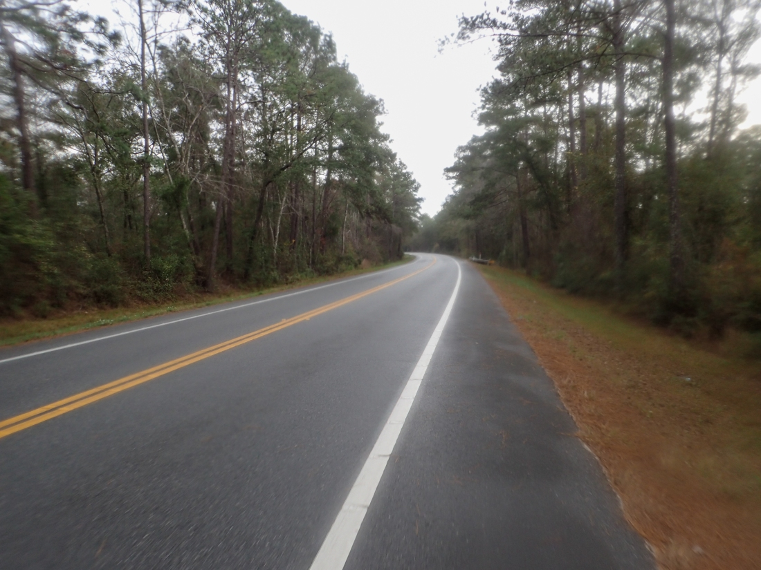 Through the forest in Florida