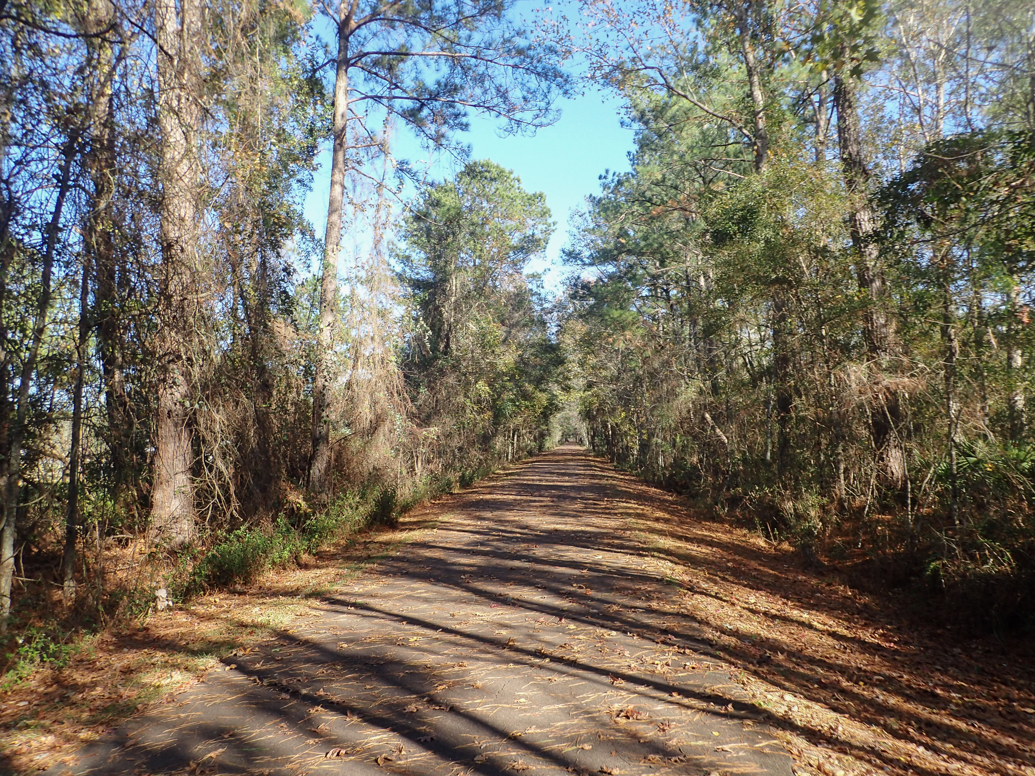 On the Baldwin Rail Trail, Florida