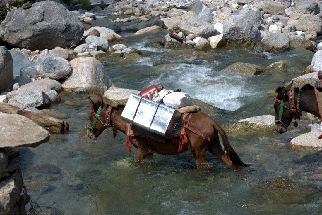 Nilara, rivier oversteek door muilezels