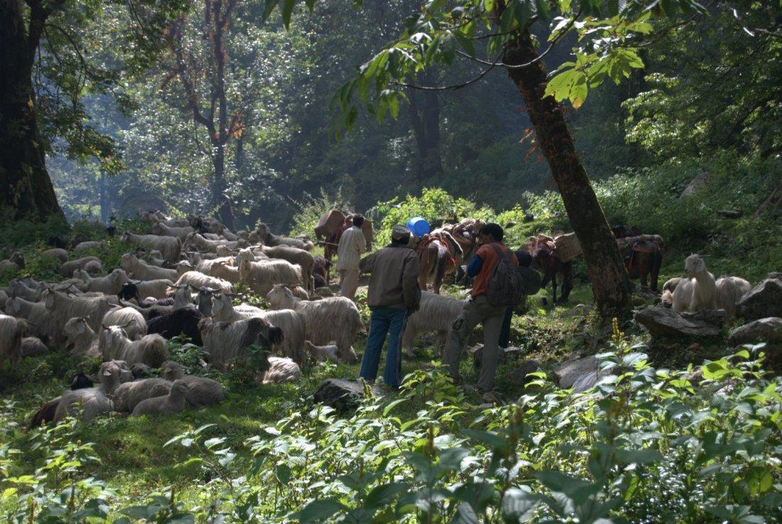 Nilara naar Belak Khal, schaapherders en muilezeldrijvers