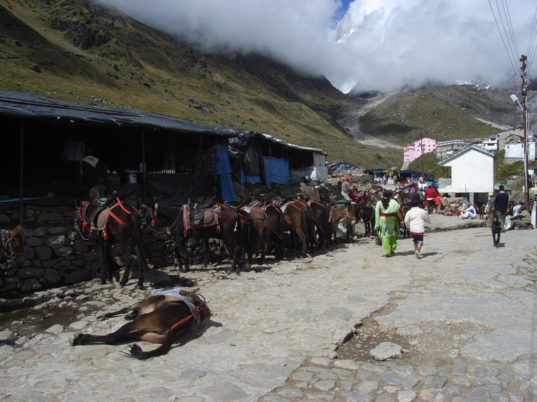 Mules and muleteers at Kedarnath, Uttarakhand, India. Trek Day 15