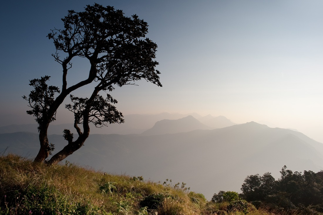 Dawn above Munnar, Kerala, India