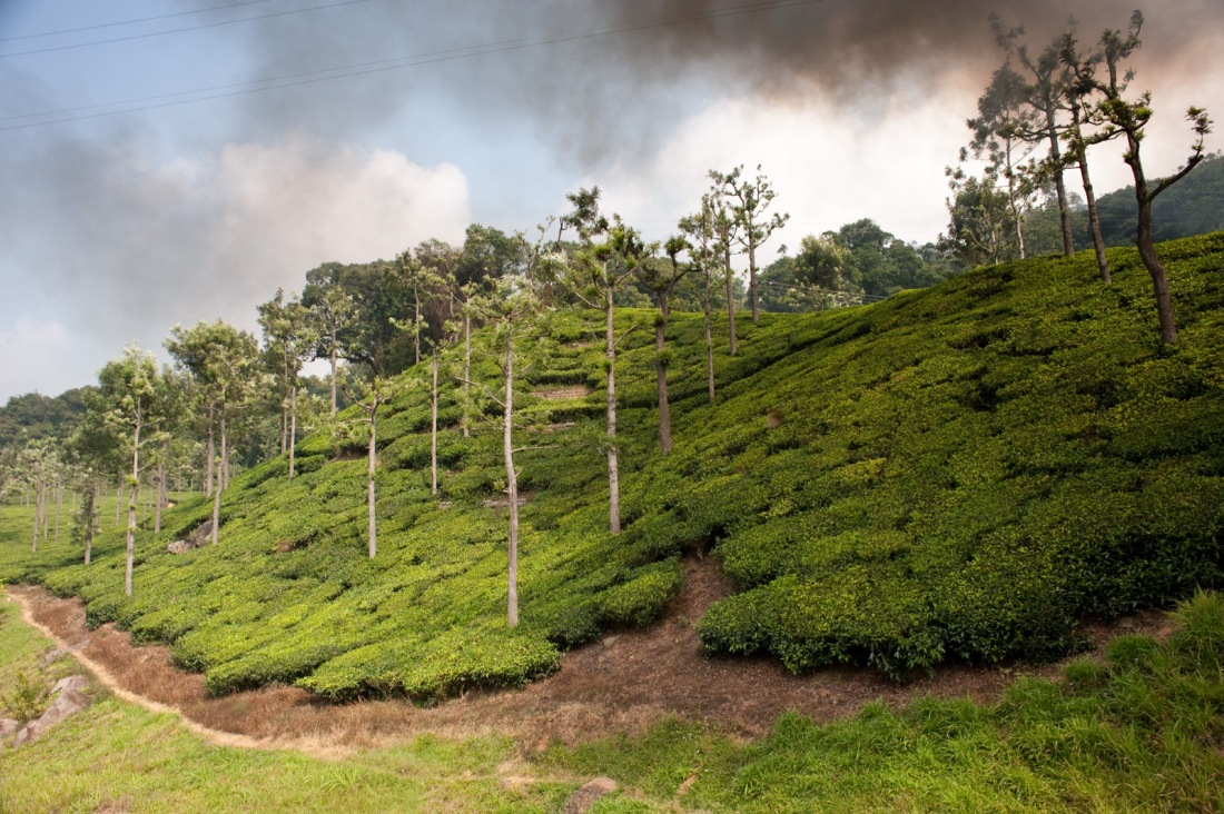 From the Nilgiri Mountain Railway, Tamil Nadu, India.