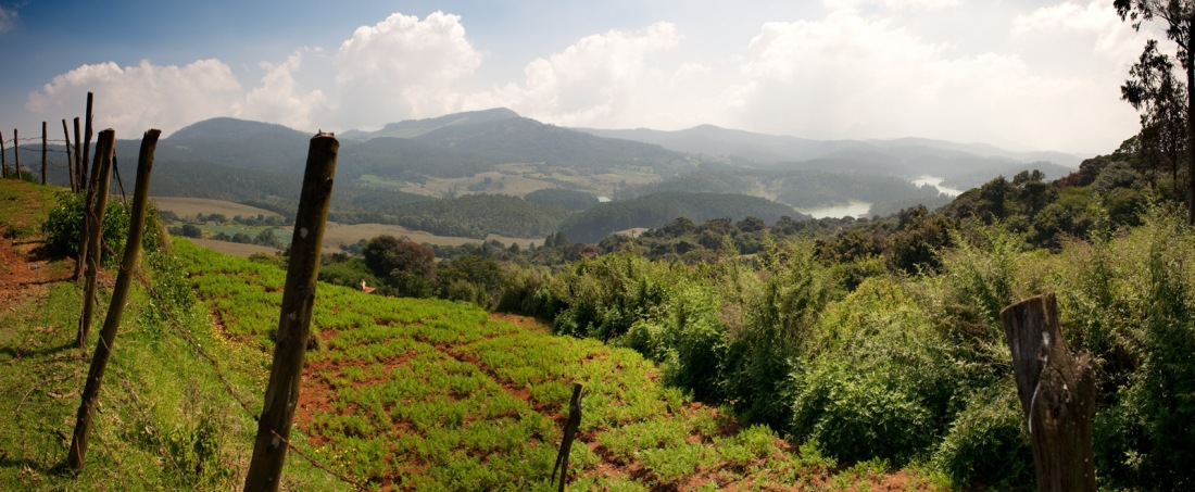 From a walk in the Nilgiri Hills around Ooty, Tamil Nadu, India