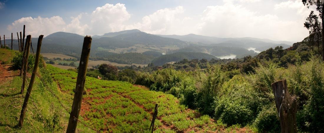 From a walk in the Nilgiri Hills around Ooty, Tamil Nadu, India